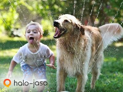 manfaat mengenalkan anak pada binatang
