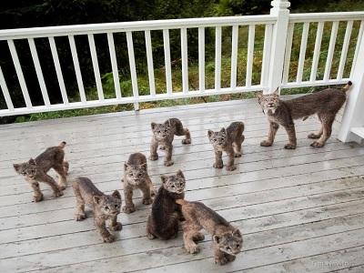 bahaya kucing liar untuk manusia.2
