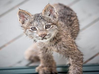 bahaya kucing liar untuk manusia